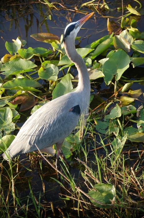 Everglades4Mar11_055