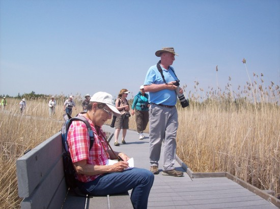 Marsh Boardwalk Presqu'ile park 2015