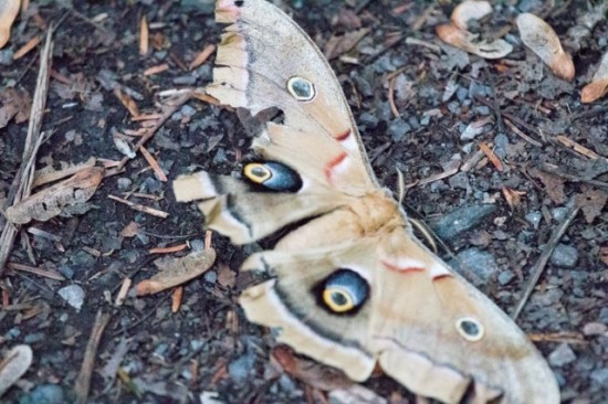 a moth-IMG_3717