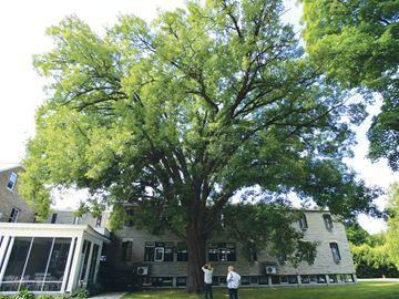 Royal Oak, Galilee Centre