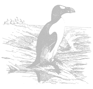 great-auk
