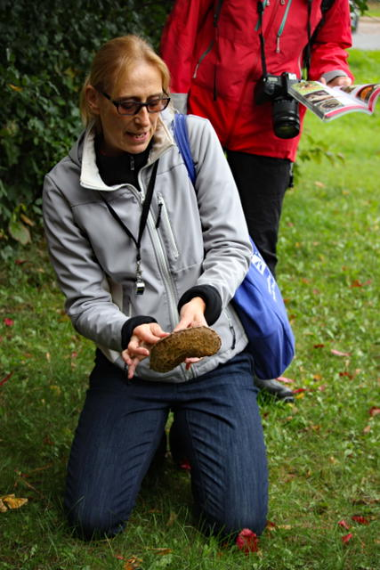 Looks like a Psathyrella sp. but Suzanne adds it to her take home basket for verification.