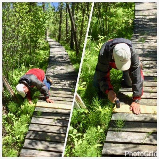 Reparing the Macnamara TRail boardwalk