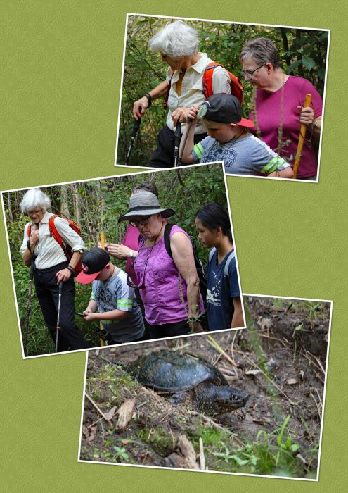 Spotting a Snapping turtle on the Crazy Horse Trail