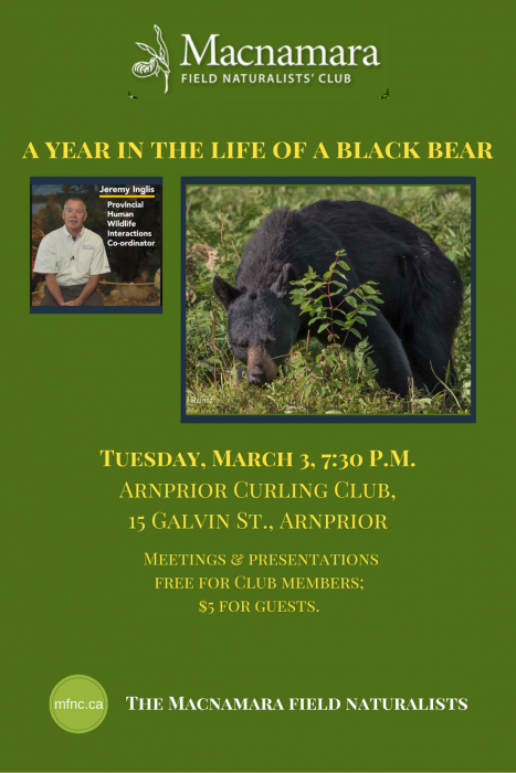 A year in the life of a black bear