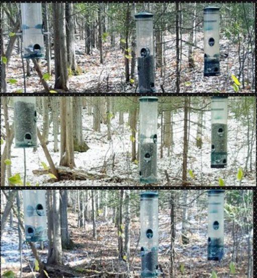 Bird feeders on Macnamara Nature Trail