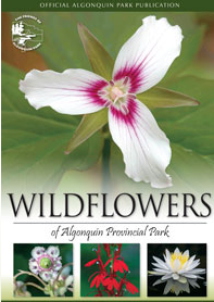 Wildflowers of Algonquin Park